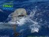 fresh-dolphin-p9172891-jpg