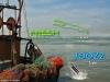 joozz-fresh-fishnet