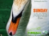 sunday-joozz-swan-p7260842-jpg